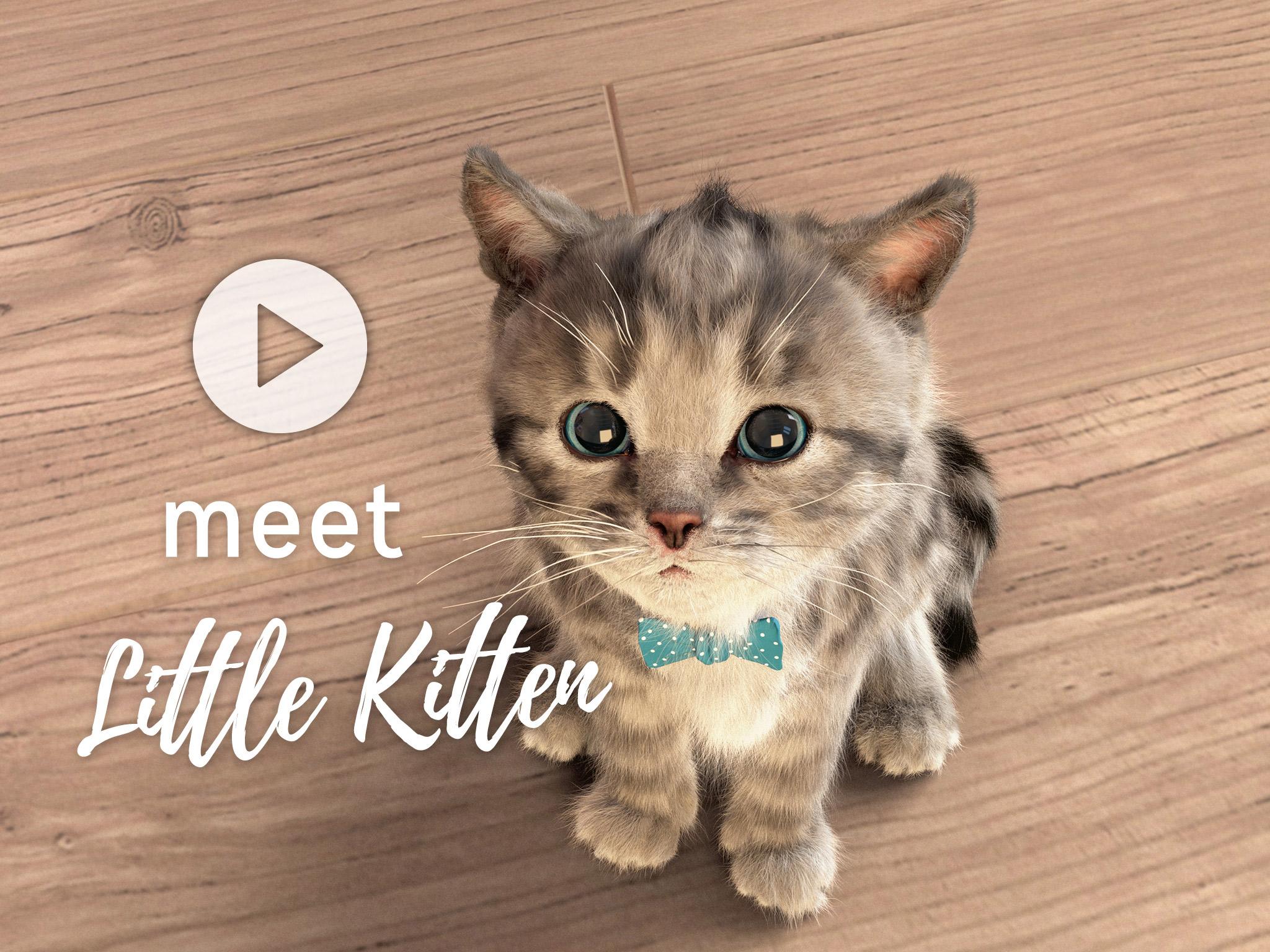 Little Kitten – My favorite Cat Squeakosaurus